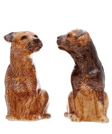 Border Terriers by Quail at Liberty
